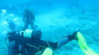 Scuba diving in the Atlantic Ocean with Turtles, Stingrays & Colorful fishes.