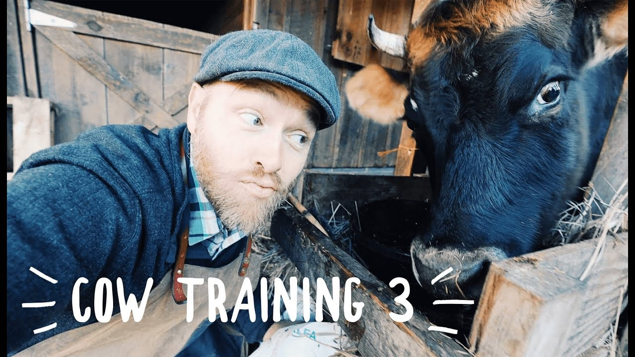 man-trains-crazy-eyed-cow-in-just-3-days