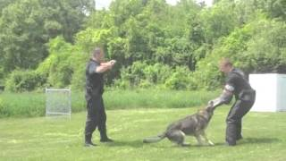 Essex County Sheriff's Department K-9 Demonstration