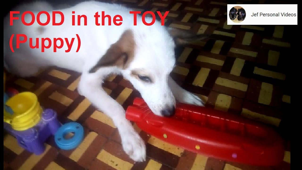 Food in the Toy (Puppy)