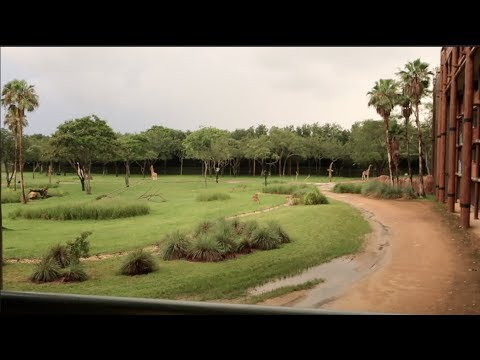 Animal Kingdom Lodge Jambo House ROOM TOUR | beingmommywithstyle