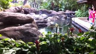 Vài Nét Về Người Việt Ở Hawaii - Honolulu, Hawaii - 10/11/2011