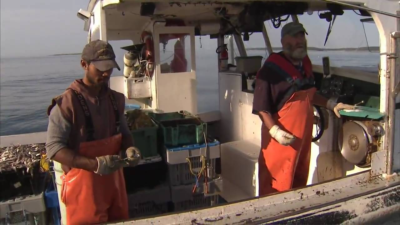 Maine Lobster Harvest America 39 S Heartland Youtube