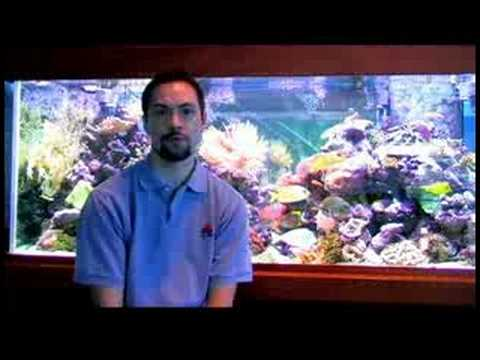 Pet fish care where to buy discount fish tank supplies for Where to buy pet fish