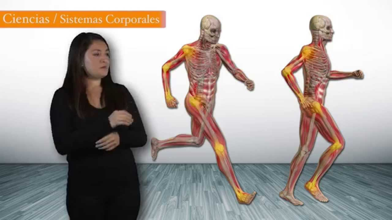 Sistema Corporal - YouTube