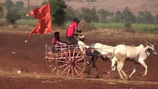 Karaguppi bulls running in bullock cart race