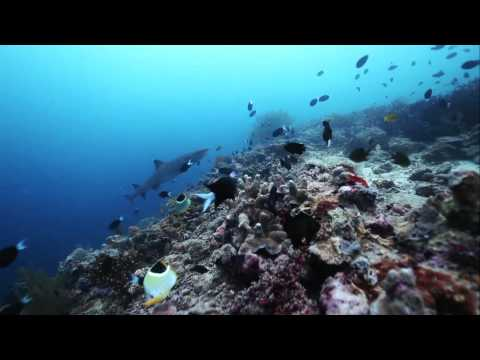 Malaysia: Your Diving Paradise VMY2014