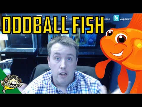 Lets Talk Oddball Fish Elephant Nose, Butterfly Fish, Baby Whale, - Live Stream