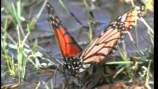 Удивительные животные (научный фильм)