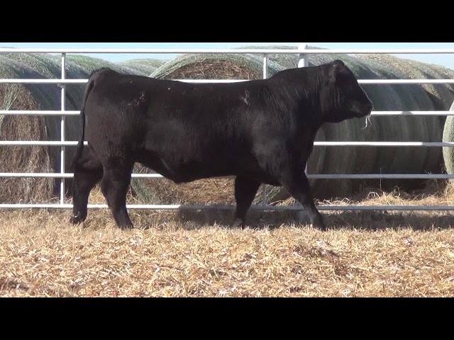 Express Ranches Lot 349