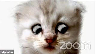 Lawyer Behind Cat Filter Explains What Happened on Zoom