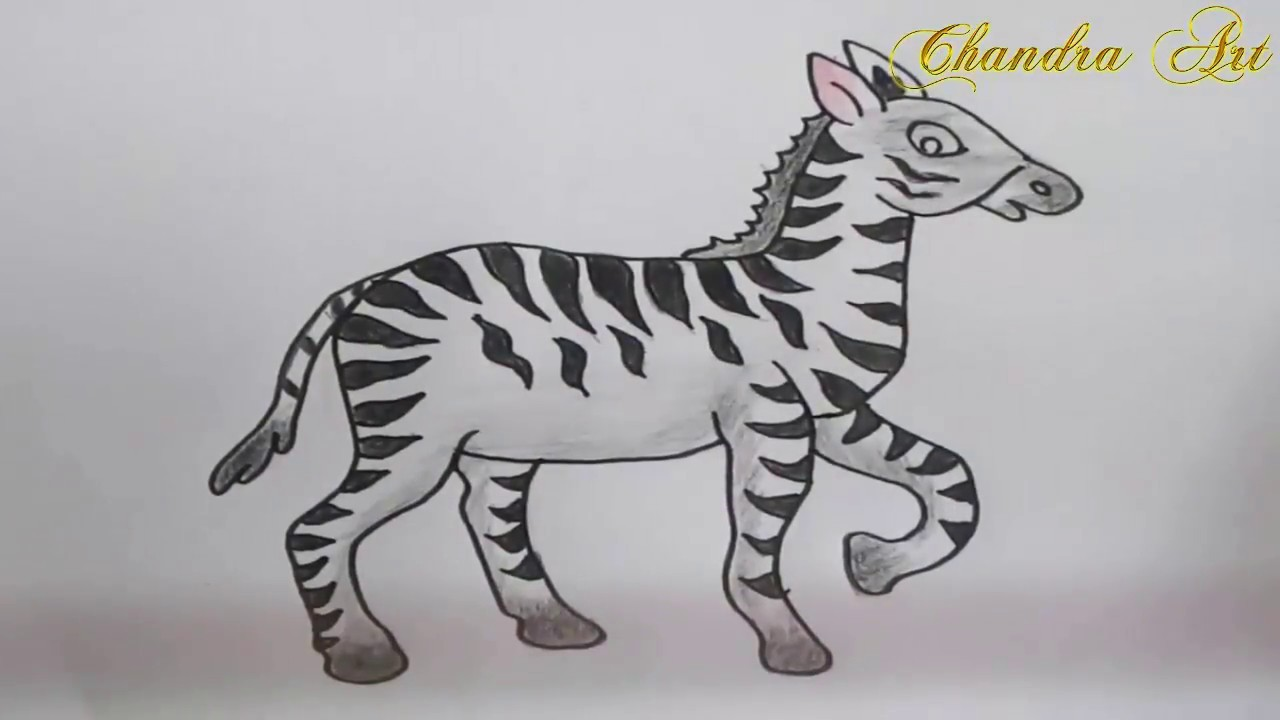 how to draw step by step - zebra drawing and coloring ...