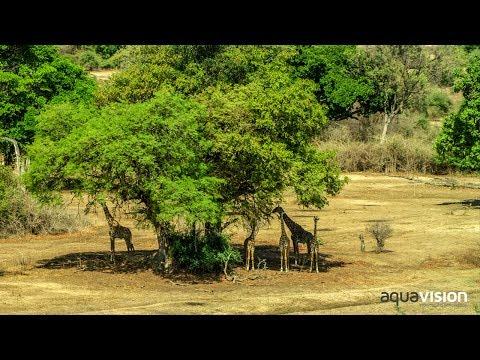 Kafue National Park - Zambia Tourism