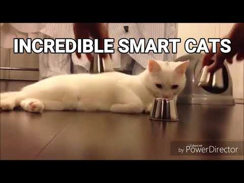 Incredible Smart Cats