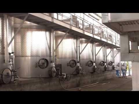 How Wine Is Made - Inside The Seghesio Vineyard