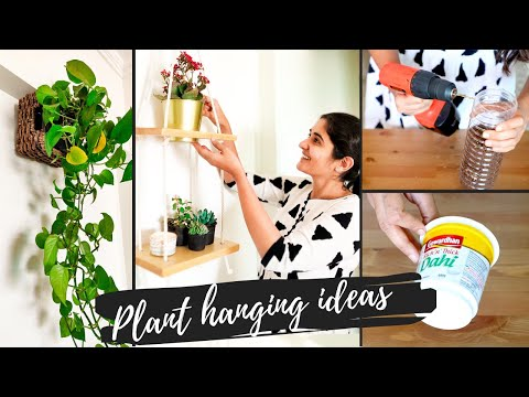 5 Unique Ideas for Hanging Plants Indoors   DIY Elegant and Easy