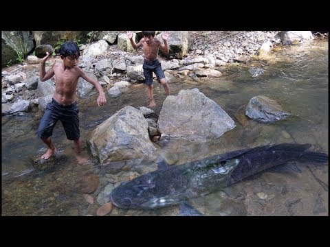 Primitive Technology - Eating delicious - Find and cooking fish recipe | Wildlife Daily