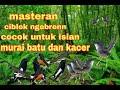 Masteran Ciblek Ngebrenn Cocok Untuk Isian Murai Dan Kacer  Mp3 - Mp4 Download