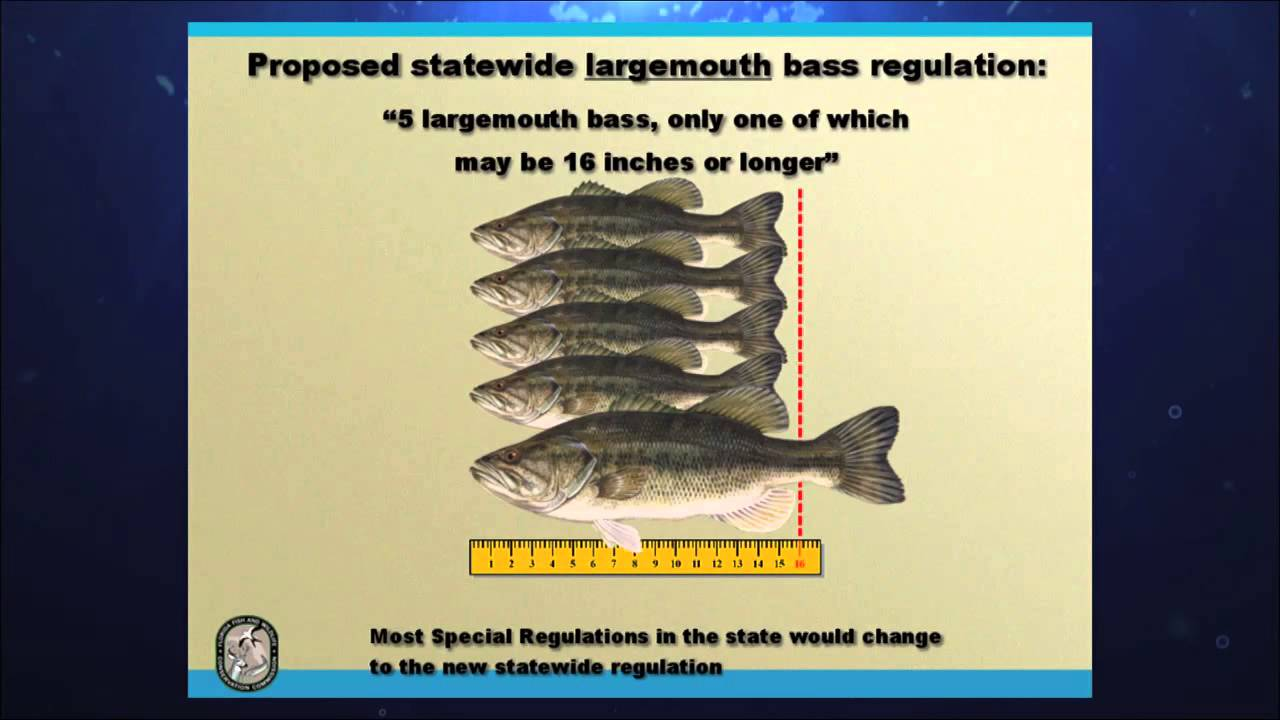 Fwc bass regulations bass 2014 chevy florida insider for Chevy florida fishing report