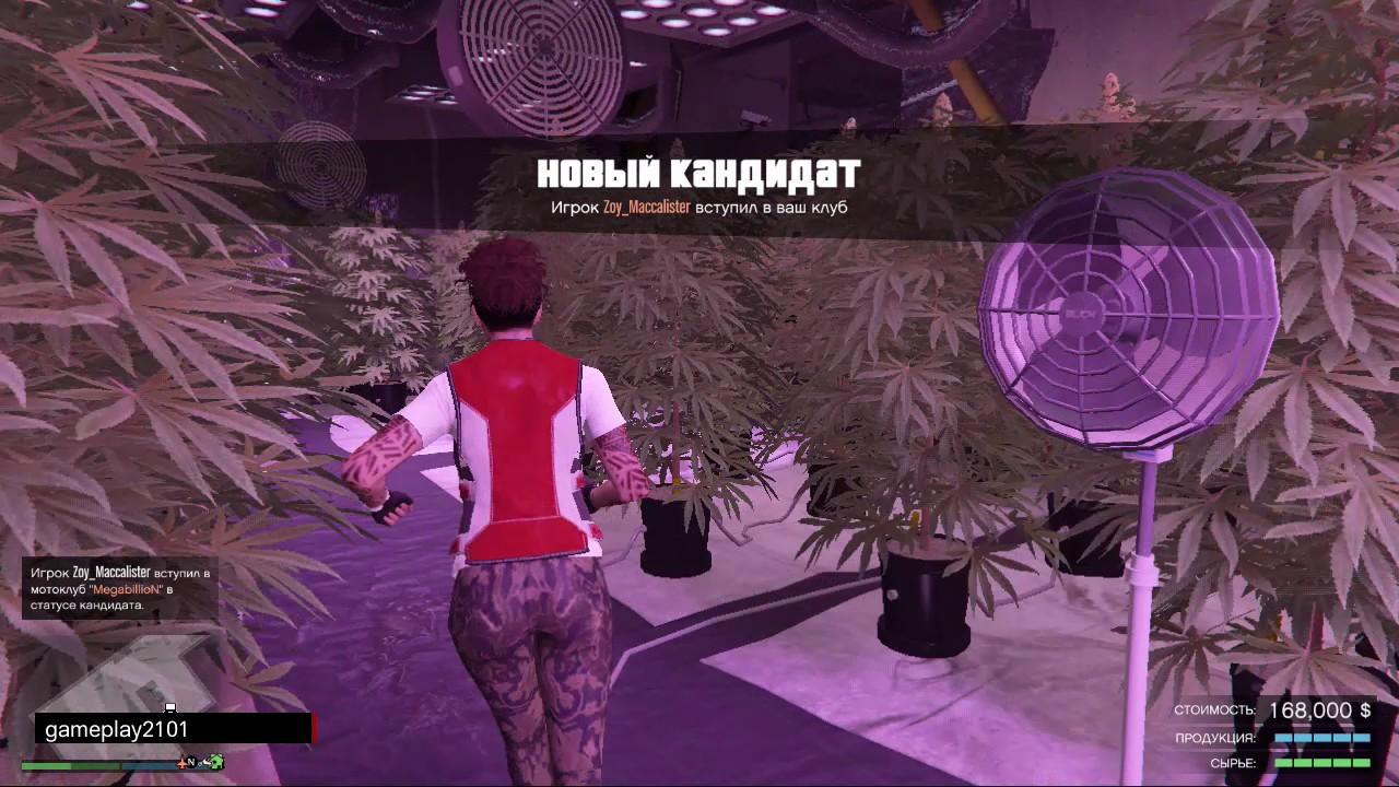 Гта 5 миссии марихуана рост конопли от семечки