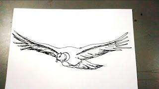 Aprende a dibujar paso a paso un Condor de los Andes
