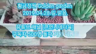 [황금정원 Golden garden, Succulent plant] 다육큰언니네 님! 선물 감사합니다. #언…