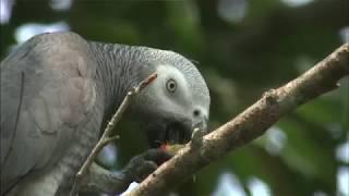 Le Gabon : Beau et magnifique pays touristique