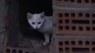 White kittens still live with mom in the basement