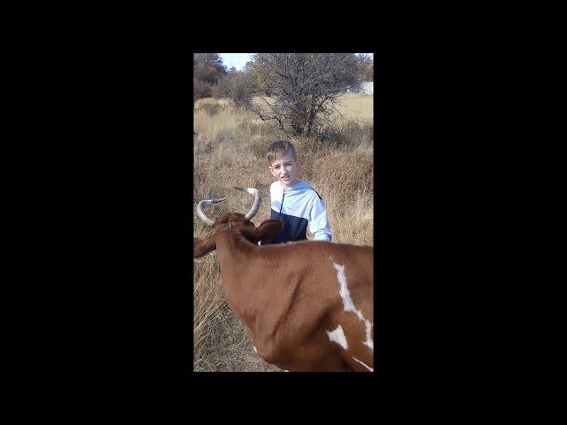 Изображение предпросмотра прочтения – ЕгорЖовба читает произведение «Корова» С.А.Есенина