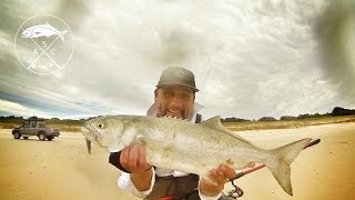 Tailor Fishing (& Jewfish) -