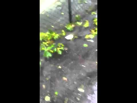 Tropical storm irene in Hyde park MA