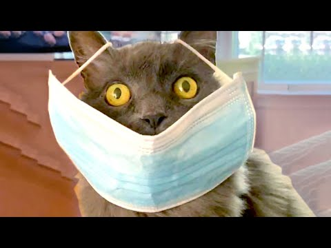 Download Cute Silly Cats   Funny Pet Videos