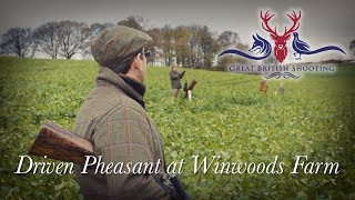 Driven Pheasant Shooting at the Winwoods Estate