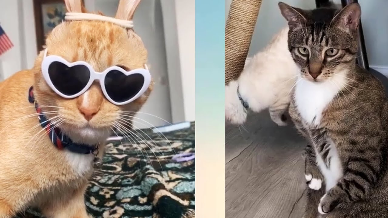 Funny Cats - Cute and Funny Cat Videos Compilation #1