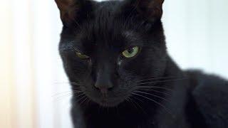 Bo Hates Everything - N2 Cat Crew S2 Ep1