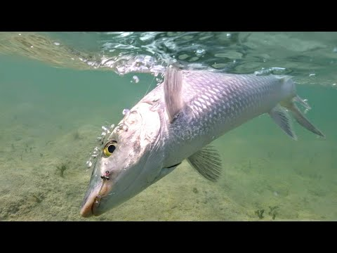 Fly Fishing The Flats For Bone Fish - Andros Island