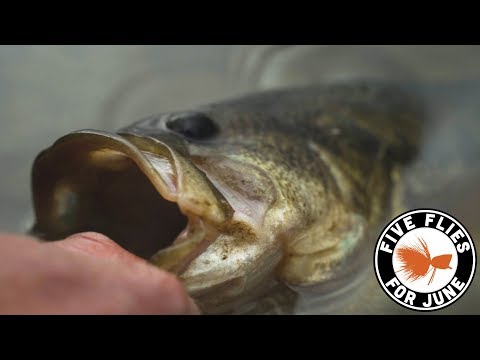 Bass Fishing Qld