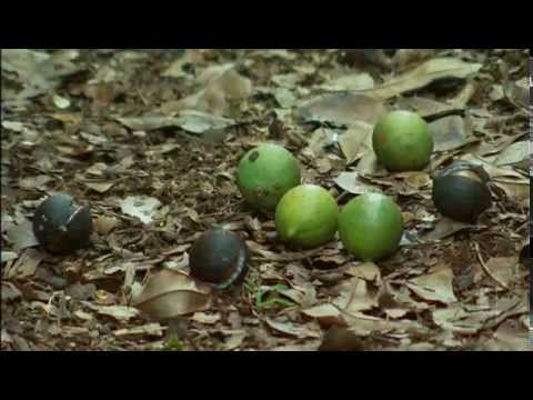Landline and Australian macadamias June 2014