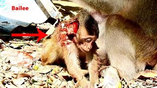 OMG !! Poor Bailee was attacked by Big Monkey !!!!!!!!!!!!!!!!!!!!