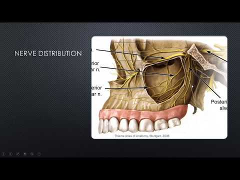Dental Implants: Minimally Invasive Sinus Lift with Implant Placement
