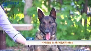 Служебные собаки со всего Пермского края боролись за звание лучшей