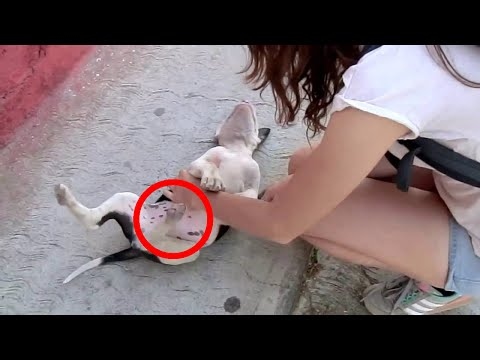 BEST FUNNY DOGS COMPILATION 2016 10 Minutes of Best Dog and Puppy Fails