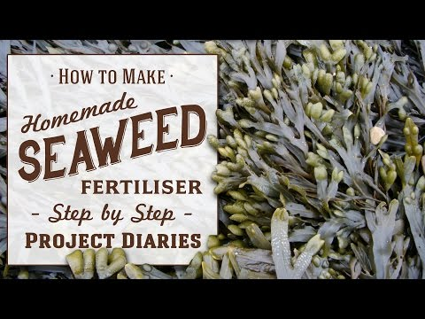 ★ How to: Make Seaweed Fertiliser (A Complete Step by Step Guide)