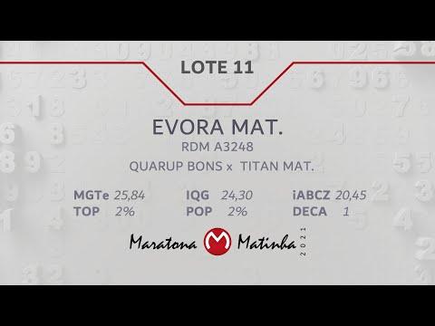LOTE 11  Maratona Matinha