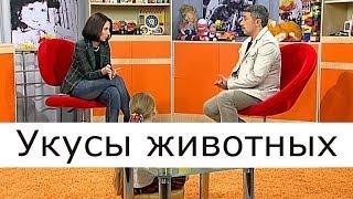 Укусы животных - Школа доктора Комаровского