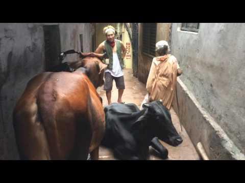 【衝撃】インドの路地裏で起こった事件