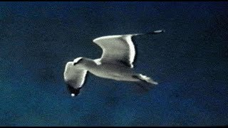 Watch David Gray Gulls video