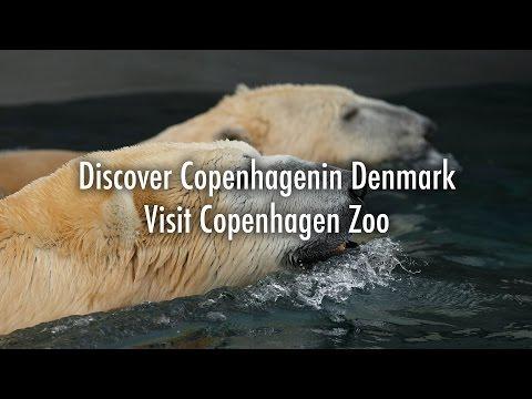 Copenhagen Zoo 4K - Copenhagen - Discover Denmark - April 2017