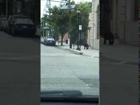 Baby bear bolts across Hawthorne street.