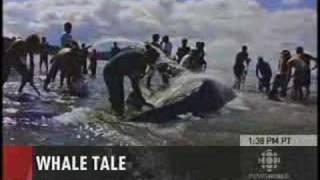 Whale Tale - Haida Gwaii